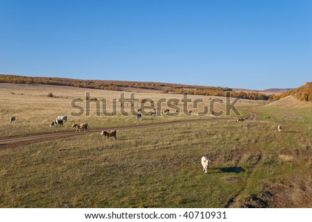 Cows on the Autumn Landscape - stock photo