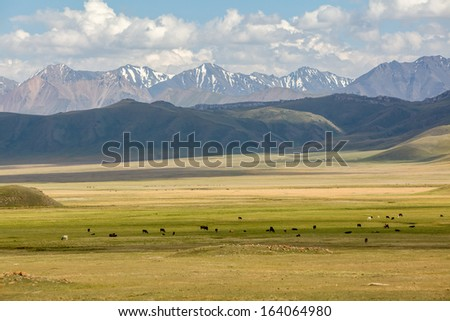 Cows pasturing in mountains of Tien Shan, Kyrgyzstan - stock photo