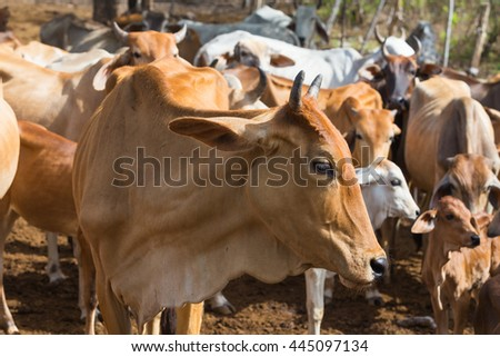 Cows standing in the paddock  - stock photo