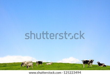 cows standing on a pasture and blue clear sky - stock photo