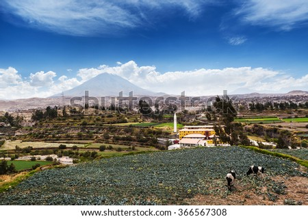 cows, volcano and the old town - stock photo