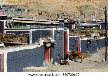 Cows waiting for owner to open the stable's door and be collected. Red-grey-white houses of the North Seat of Sakya-Grey Soil monastery on Bonbori Hill. Chong Chu-river right bank in Sakya-Tibet.