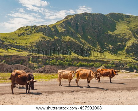 Cows walking along the road on a background of mountains covered with green grass.