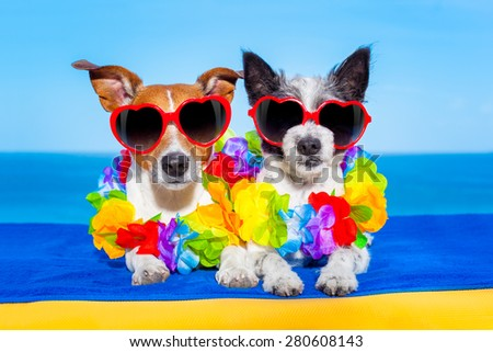 cozy couple of dogs in love, just married ,on honeymoon summer holiday vacation at the tropical beach, wearing heart shaped sunglasses and flower chain