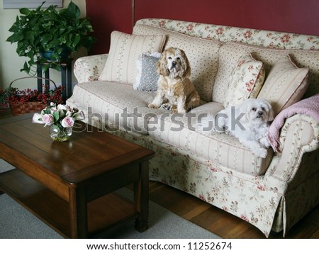 cozy living room with dogs sitting on couch - stock photo