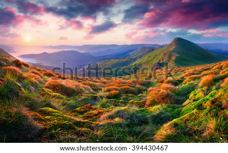 Cozy morning scene in the mountain. Rolling hills and foggy valley glow under warm sunlight. Sunrise in Carpathians, Ukraine.
