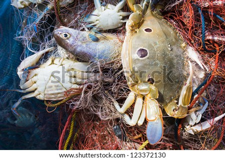 Crab and fish in a fishing nets - stock photo