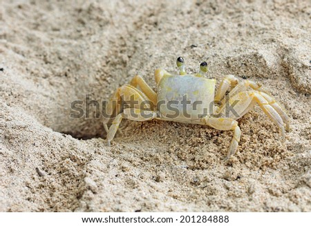 Crab - back view - stock photo