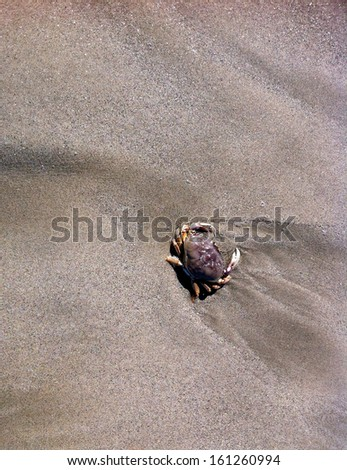Crab crawls across sand. - stock photo