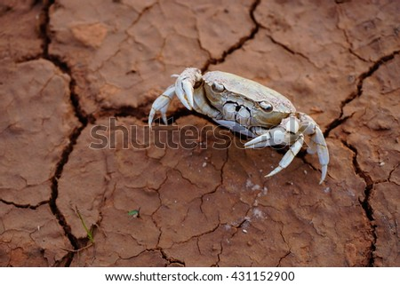 Crab died on crack ground due to drought and river dried up  - stock photo