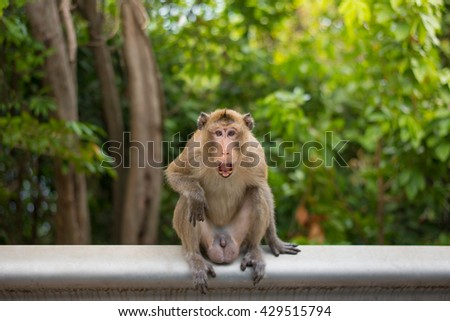 Crab-eating macaque on fence in the park
