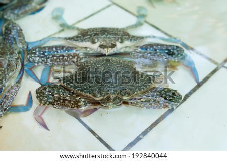 Crab in Water - stock photo
