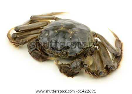 Crab isolated in white background