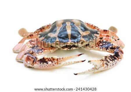 crab isolated on white background - stock photo
