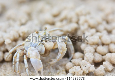 Crab making sand balls on the beach - stock photo