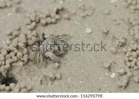 Crab making sand balls on the beach - stock photo