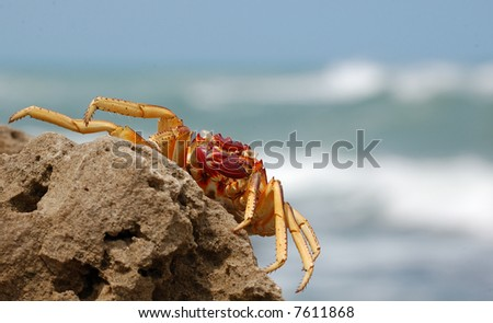 Crab on a rock - stock photo