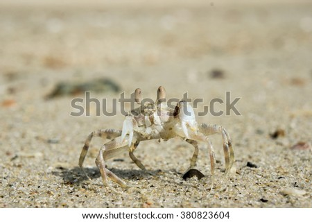Crab Stock Photos, Images, & Pictures | Shutterstock