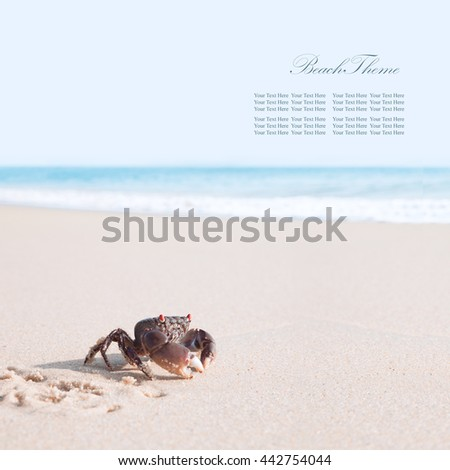 Crab on a tropical beach. Banner. Extra space for your text  - stock photo