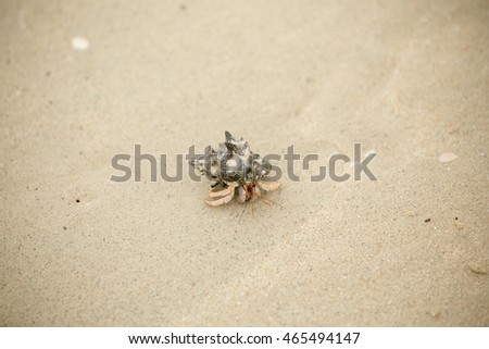Crab on the beach.