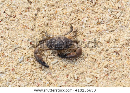 Crab on the beach at Bamboo island,Thailand.
