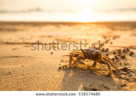 Crab on the coast sea in the tropics - stock photo