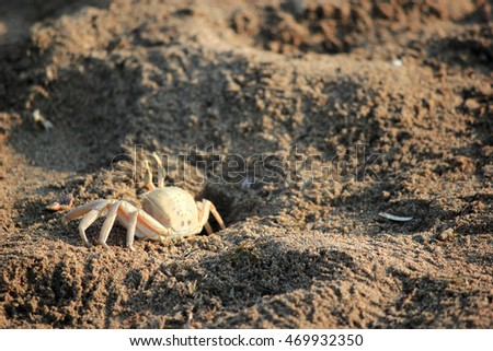 Crab on the sand.