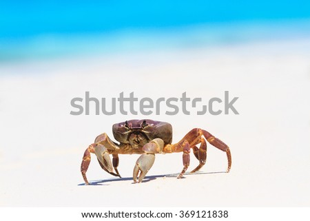 crab on white sand beach with sky - stock photo