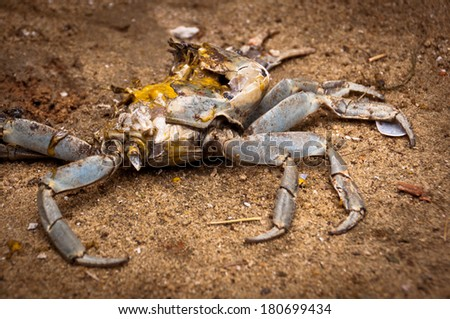 Crab Remains on Sand - stock photo