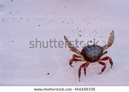 crab watercolor on the sand