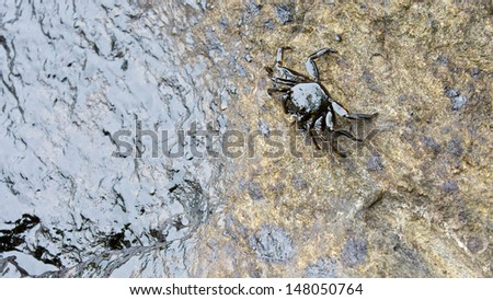 crab with crude oil spill on the stone at the beach, focus on crab - stock photo