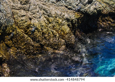 Crabs on a Sea Rock - stock photo