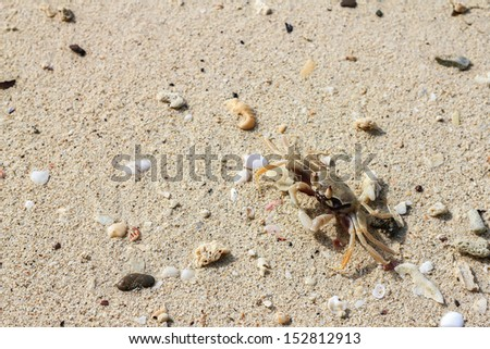 Crabs on the beach with small pebbles