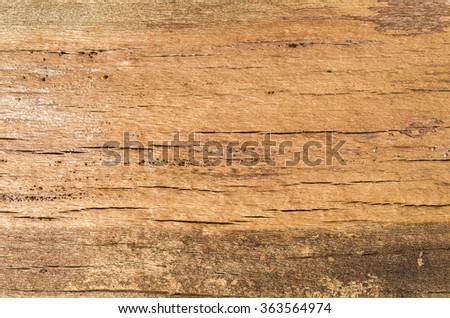 Cracked beech trunk closeup  in sunny day