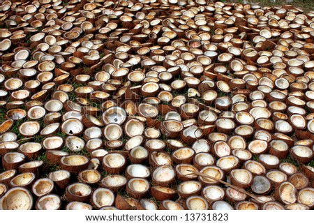 cracked coconuts - stock photo