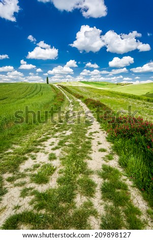 Cracked dirt road between green fields