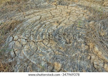 Cracked, dry ground - stock photo