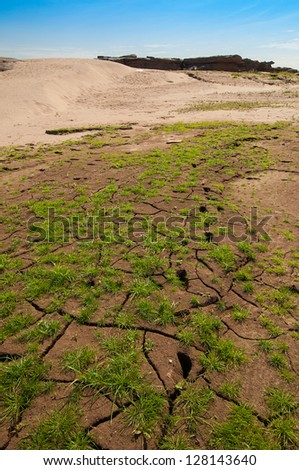 Cracked Earth and green grass. Dried Ground - stock photo