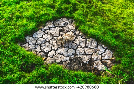 Cracked earth ground texture in paddy field around in the morning time. - stock photo