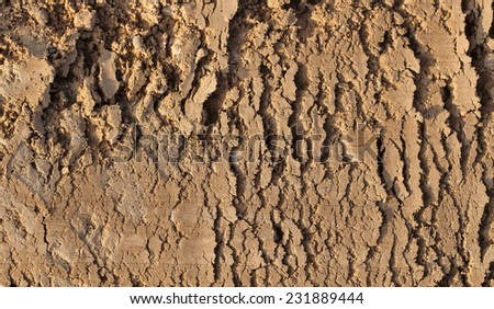 Cracked earth texture - stock photo