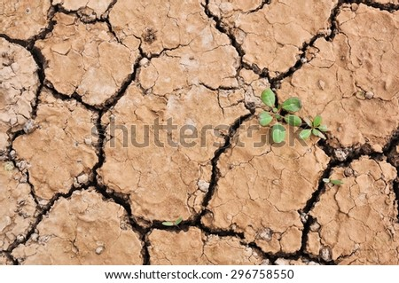 Cracked ground,Dry land. Cracked ground background,Dry cracked ground filling the frame as background, Drought land - stock photo