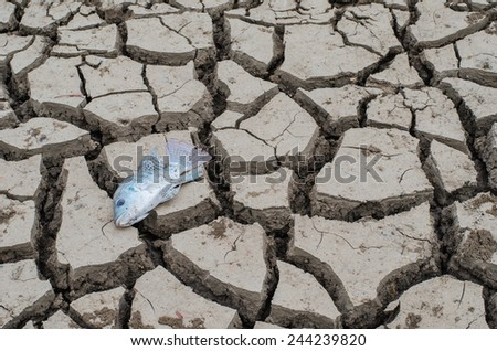 cracked land and dead fish on hot and dry ground - stock photo