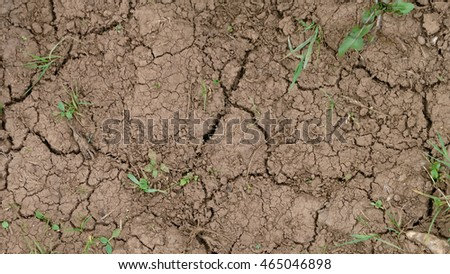 Cracked mud with grass texture