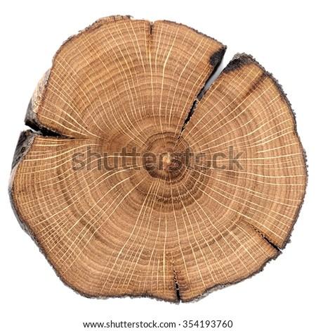 Cracked oak split isolated - stock photo