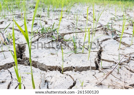 Cracked soil in a dried paddy field. - stock photo