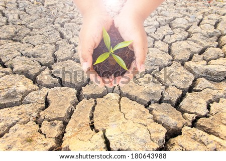 cracked soil texture with young green plant in hands. Ecology concept
