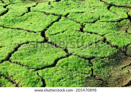 Cracked soil with fresh grass - stock photo