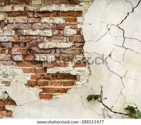 Cracked wall texture with bricks and plant