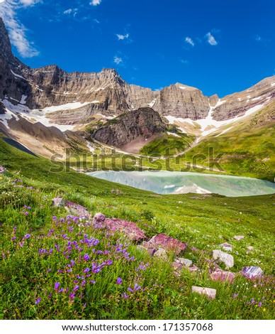Cracker Lake and beautiful wild lilies in Glacier national park, MT  - stock photo