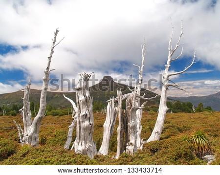 Cradle Mountain - Lake St Clair National Park - stock photo
